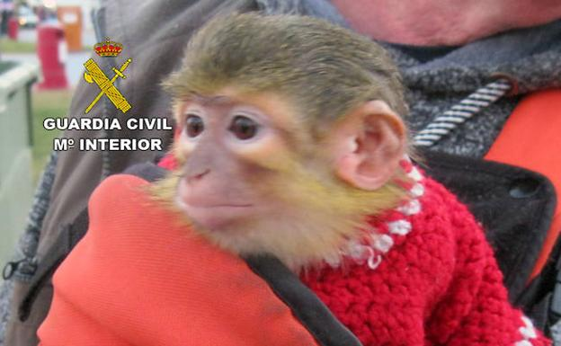 El animal, tras su rescate./Guardia Civil