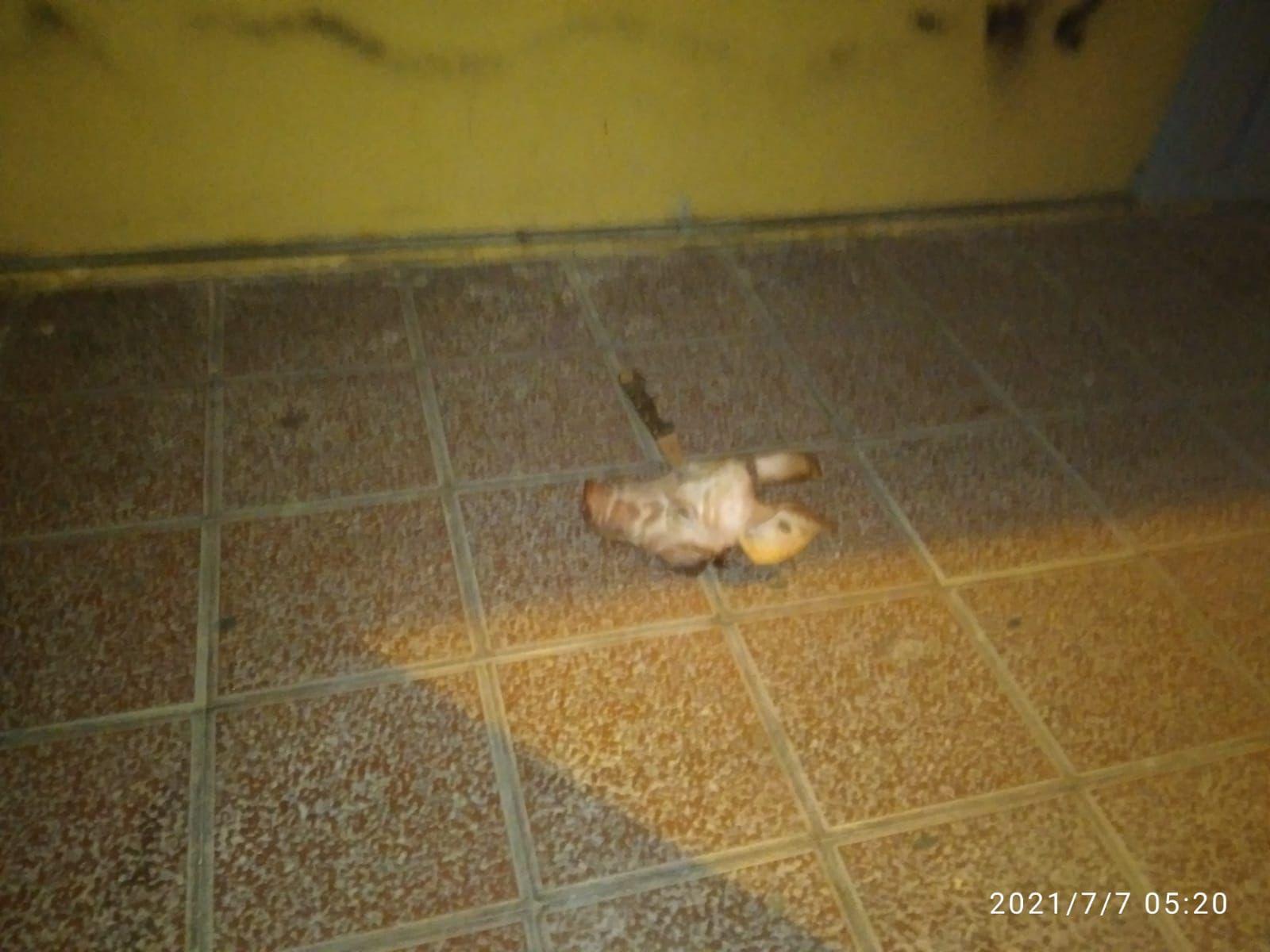 Cabeza de cerdo lanzada a la mezquita.