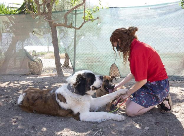 María, ayer, con sus dos canes, en el centro de adiestramiento de la asociación Proyecto Ecan. / ROS CAVAL / AGM