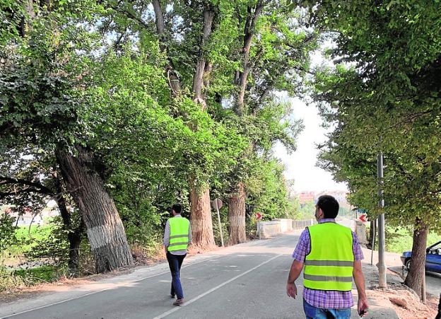 Técnicos de Medio Ambiente supervisan el estado de los árboles.